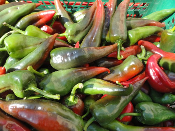 Greeny red peppers in Catalonia