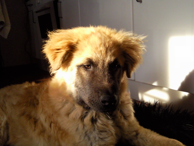 Bungle - an abandoned dog in Spain