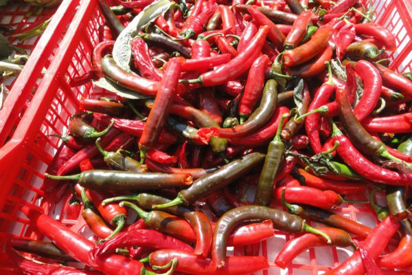 red and green Spanish chillis