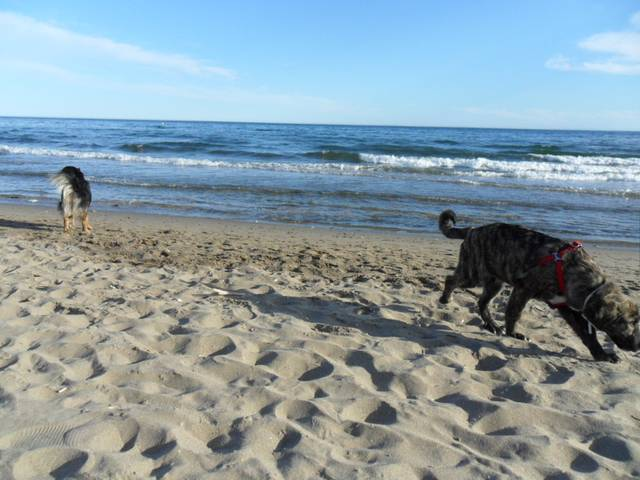 Dogs play a big part in our lives so taking them along the Dunas de Artola Cabopino was part of our ritual.