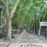 Lisbon in pictures - tree lined avenue