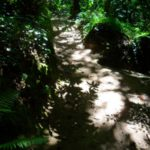 Pena in Sintra - the gardens (15)