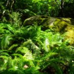 Pena in Sintra - the gardens (16)