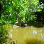 Pena in Sintra - the gardens (4)