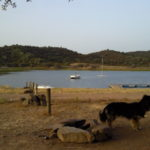 Sweep thinks about having a dip in the waters of Alqueva Lakes, Alentejo, Portugal.